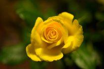 Leica-M-Sample-Image
